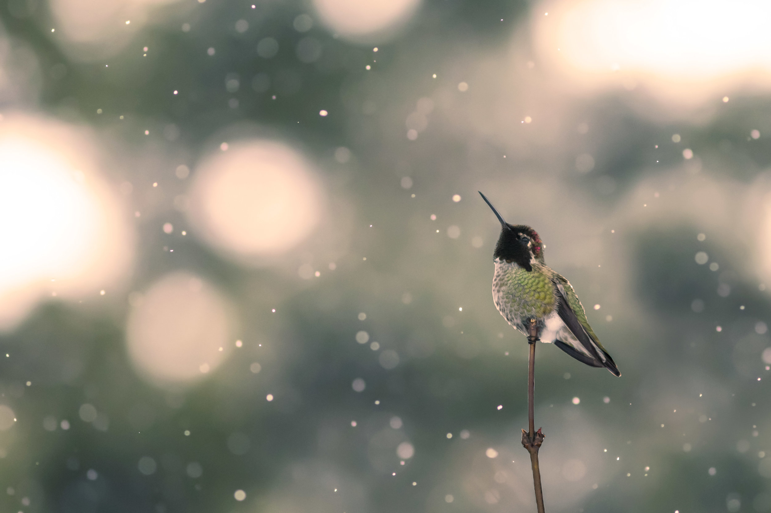 Snow-Hummer-SAved-for-Web-akheje.jpg