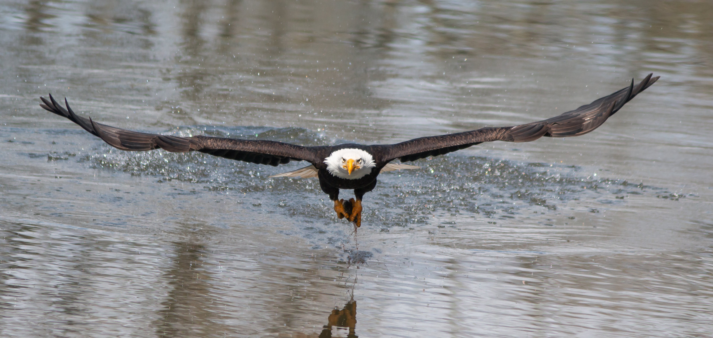 EAgle-Saved-for-Web-Narrow-dje.jpg