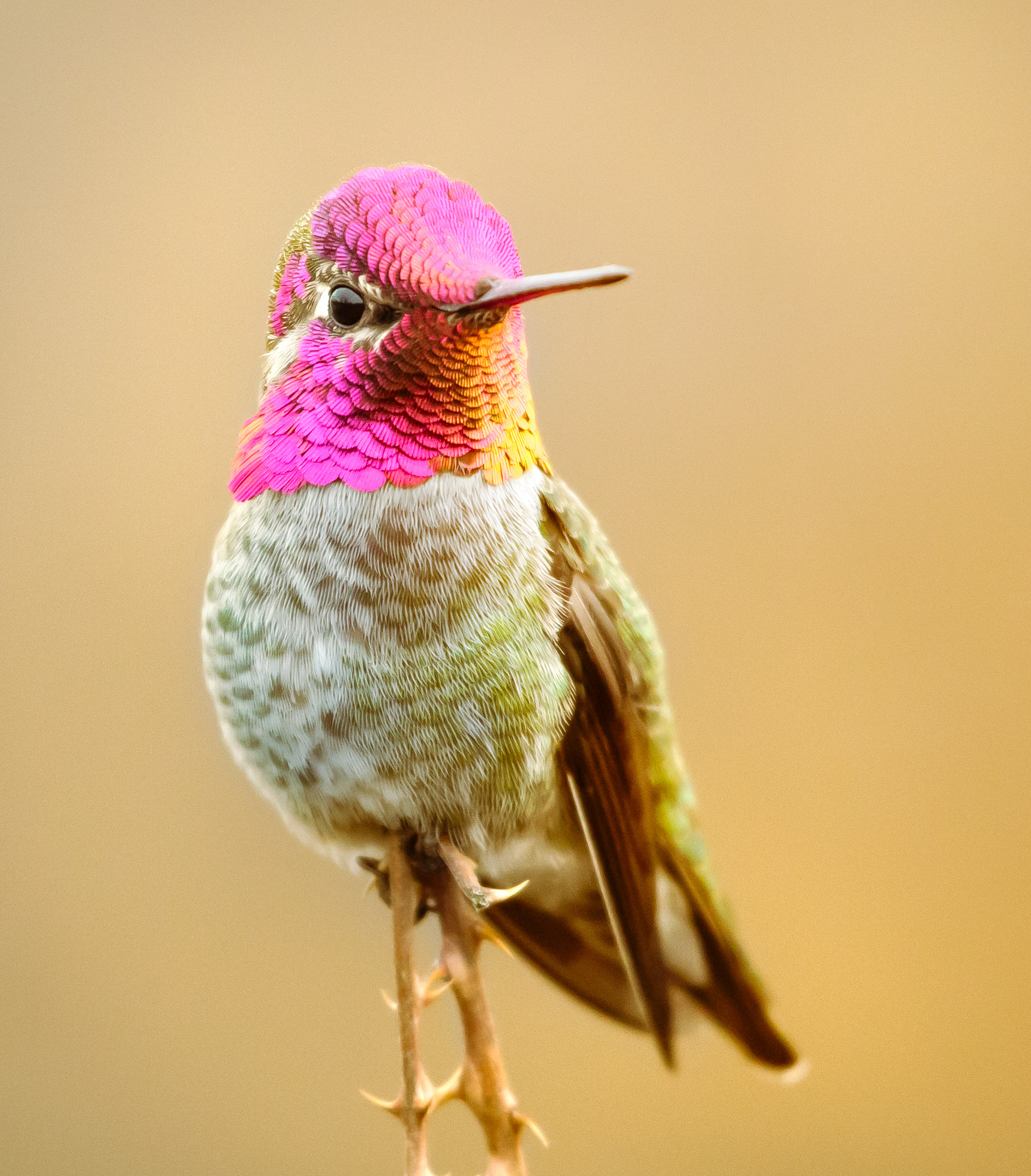 Annas-hummer-Saved-for-Web-kdlekje.jpg