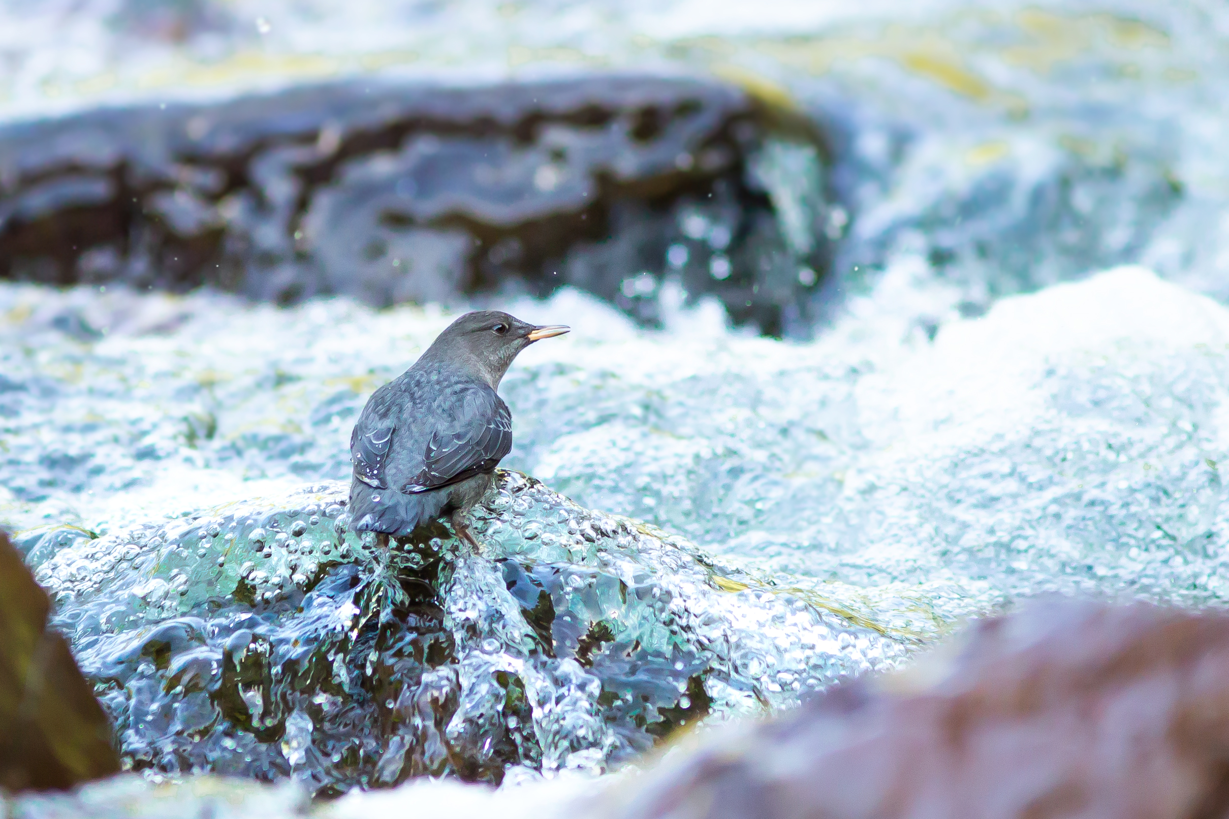 Dipper-Bubbles-Saved-for-WEb-Landscape-crop-ahe.jpg