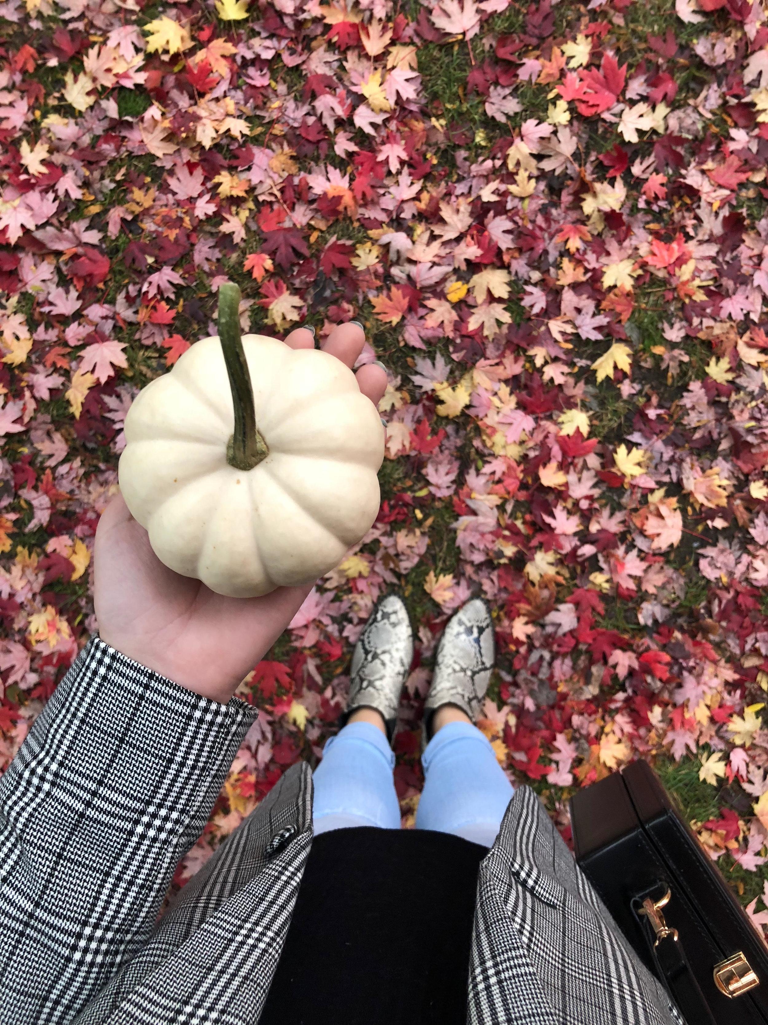 fall #15.jpg