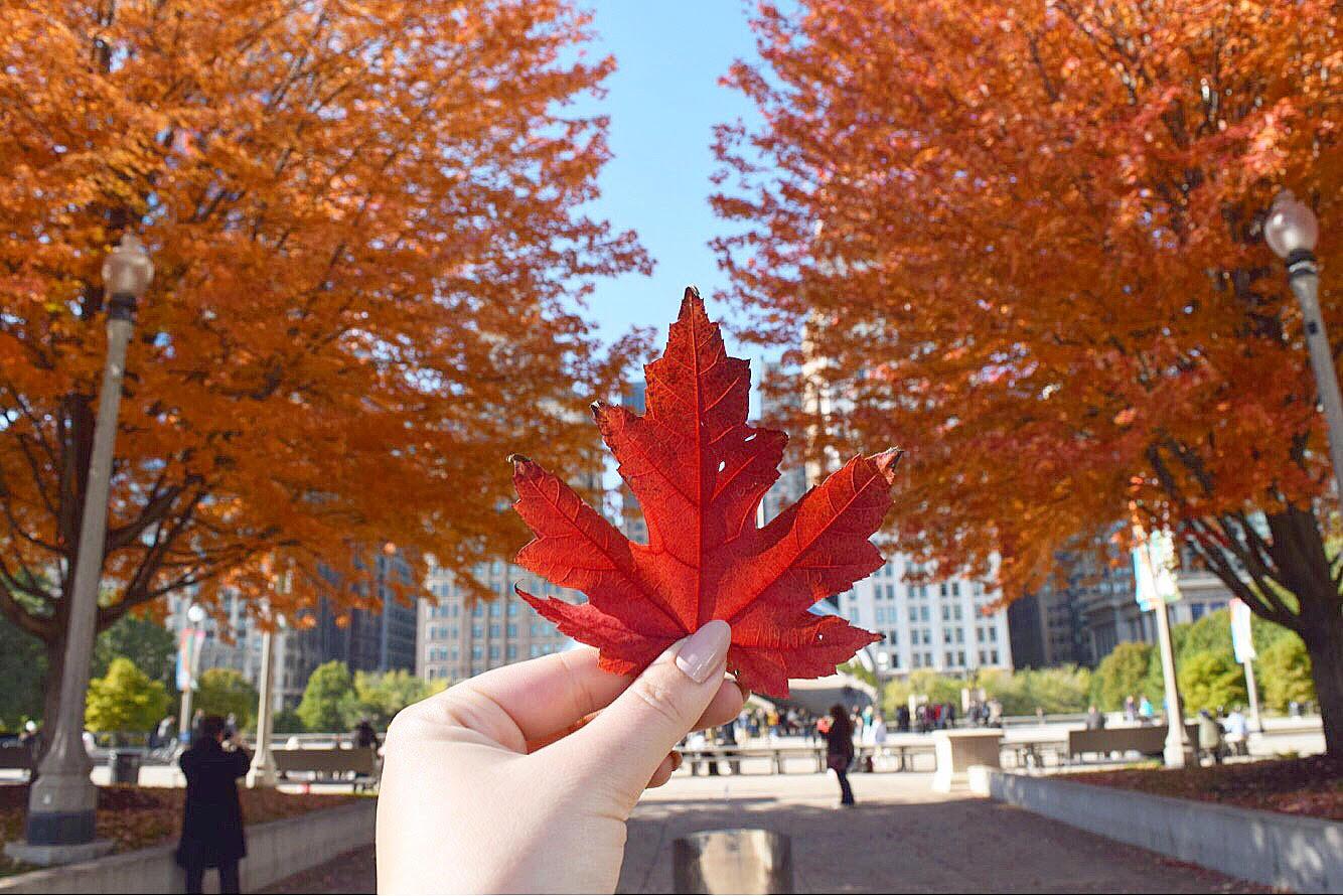 fall #32.jpg
