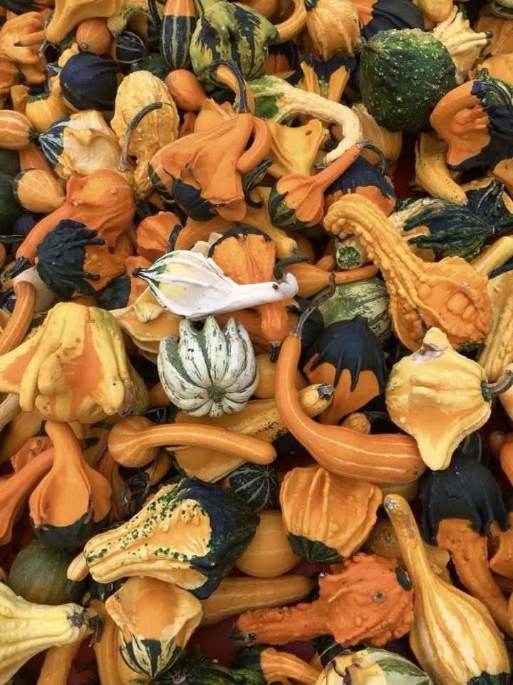 fall #42.jpg