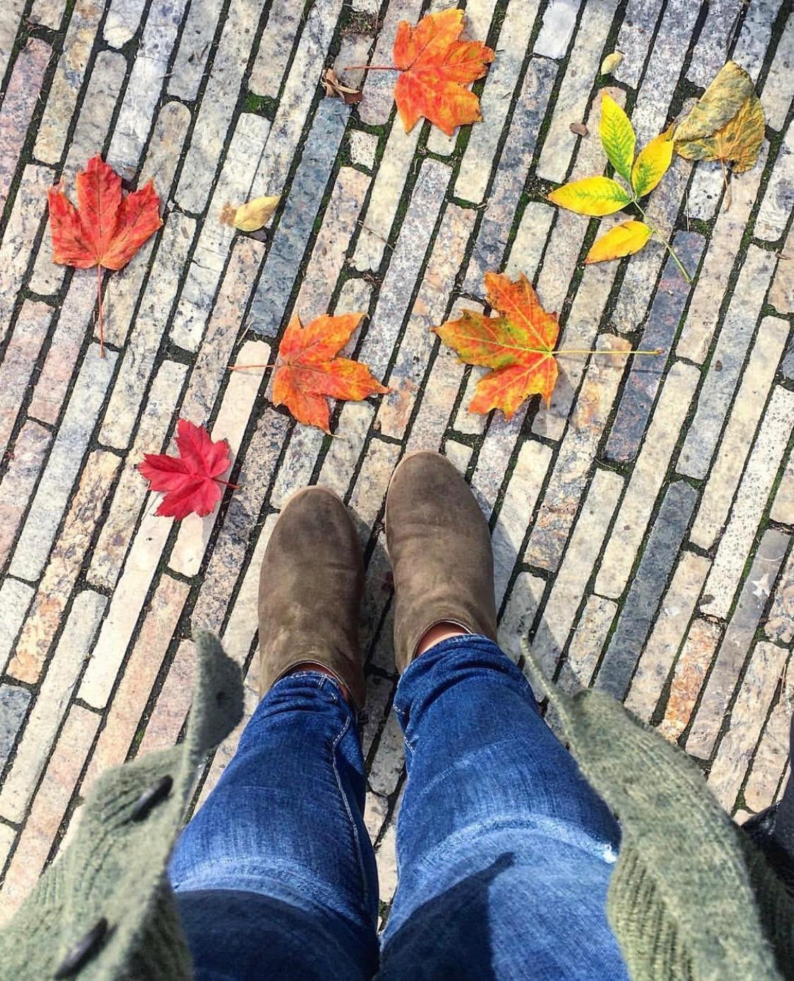 fall #50.jpg