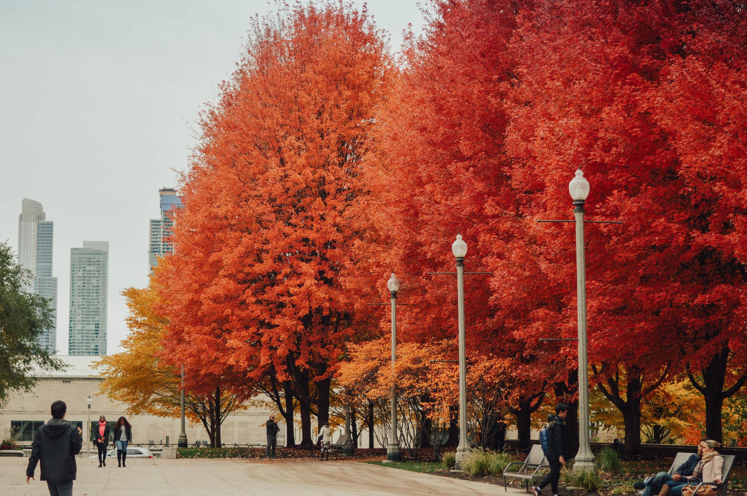 fall #62.jpg