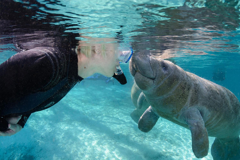 Underwater-Three-Sisters-Springs-Manatee-Snorkeler-18.jpg