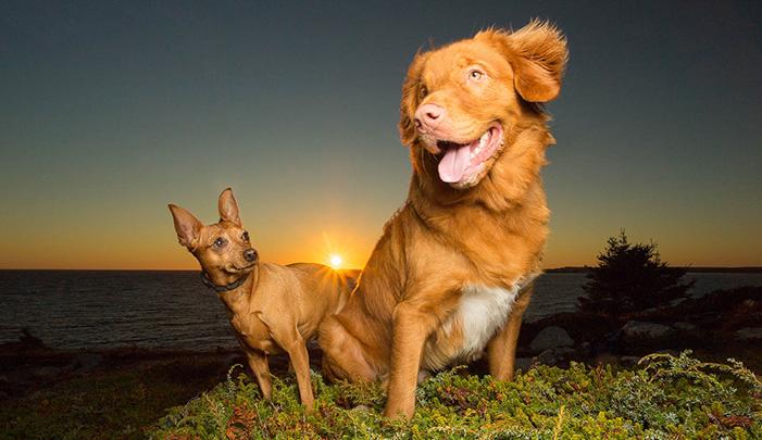 dogs-standing-in-sunset.jpg