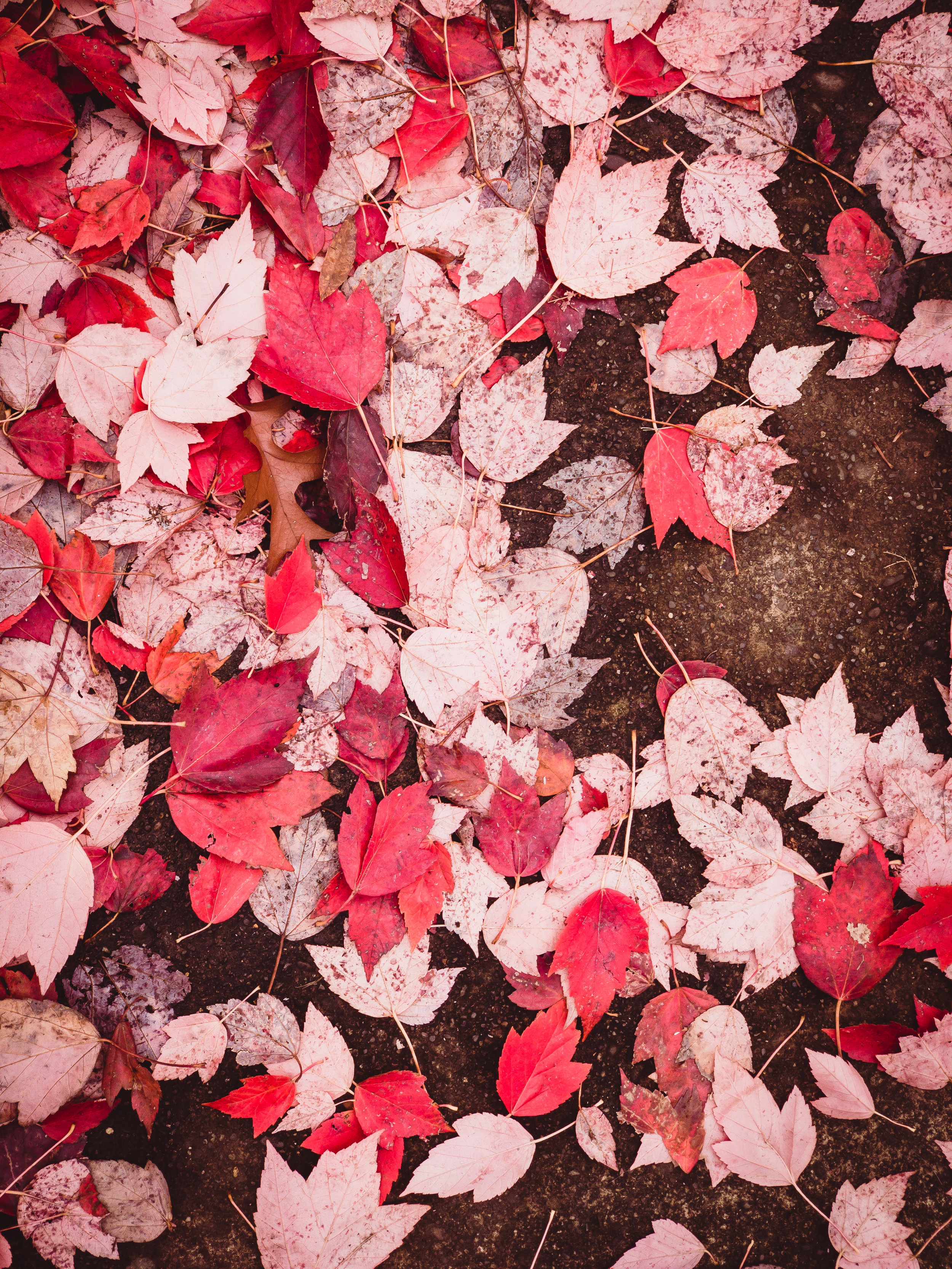 Fallen Leaves in Salem - The colors of the Pacific Northwest as the year wraps up always make me want to pause and take a calm moment to relax.