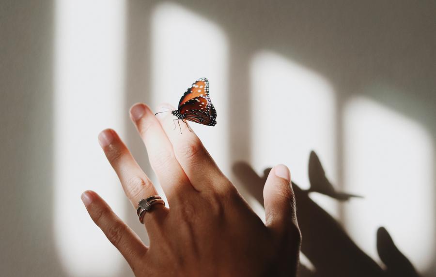 butterfly-on-finger.jpg