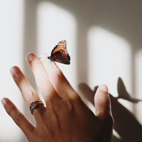 butterfly-on-finger.jpg