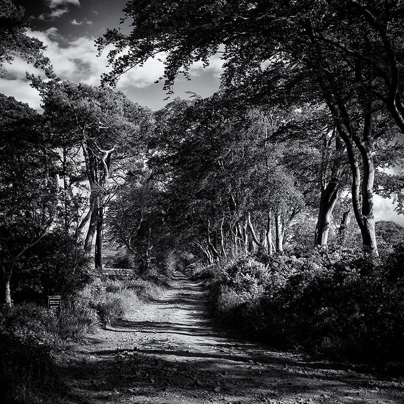 FARM TRACK AT TYNINGHAM  -  CLICK HERE TO SELECT AND PURCHASE THIS IMAGE