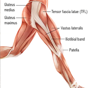 The tensor fascia latae (TFL) at the front of the hip.