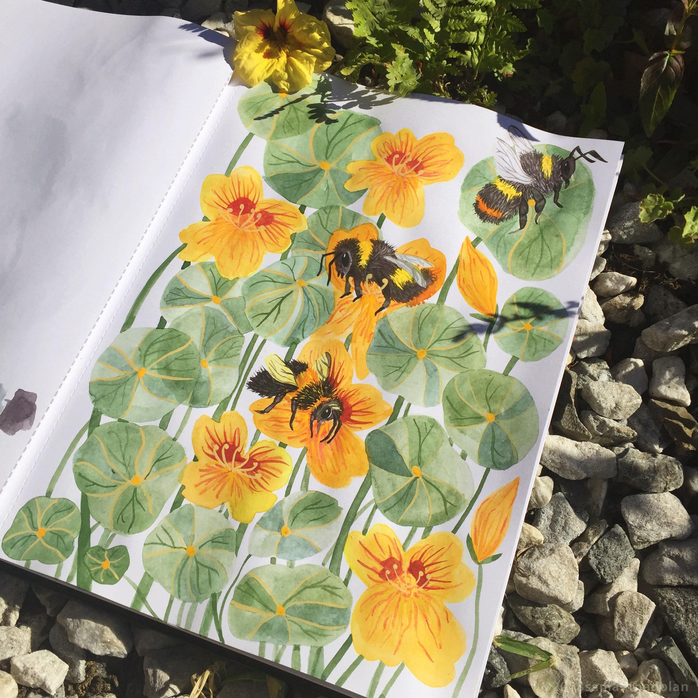 Bumble Bees, watercolour, gouache and pencil, June Sketchbook.