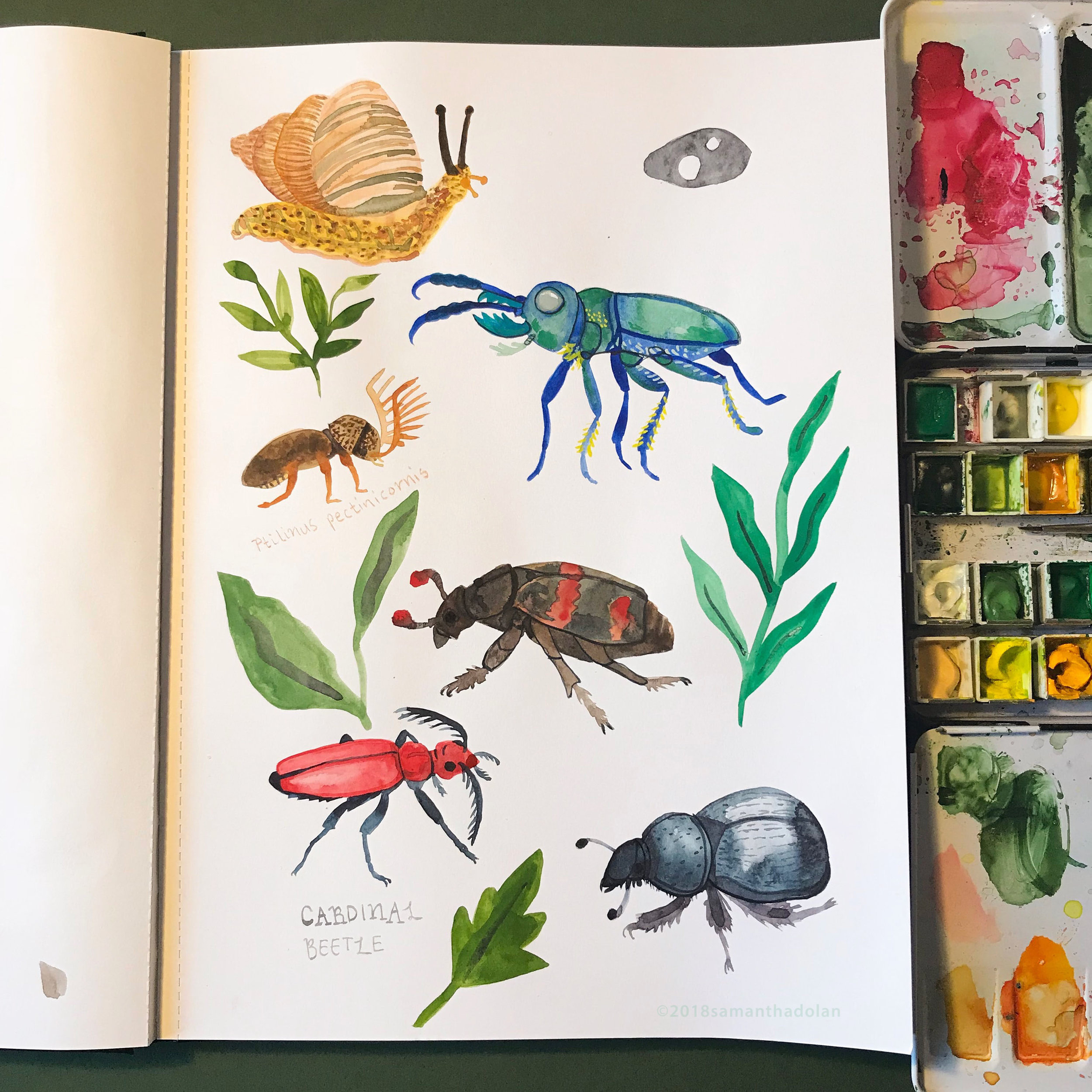 Painting more insects, June 2018.