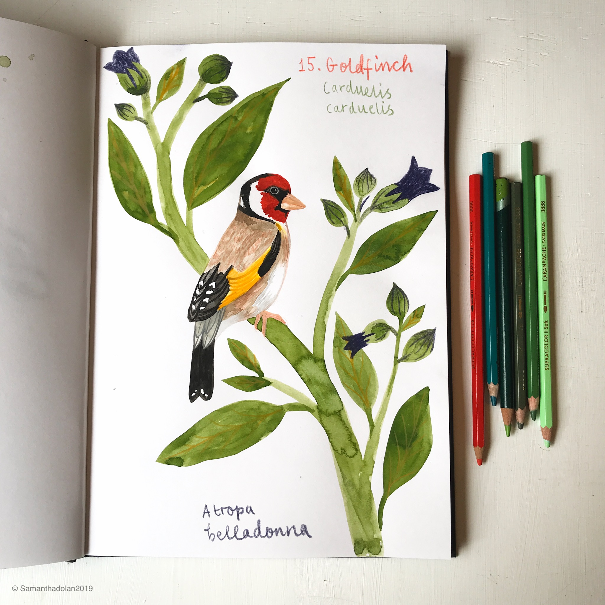 goldfinch by samantha dolan