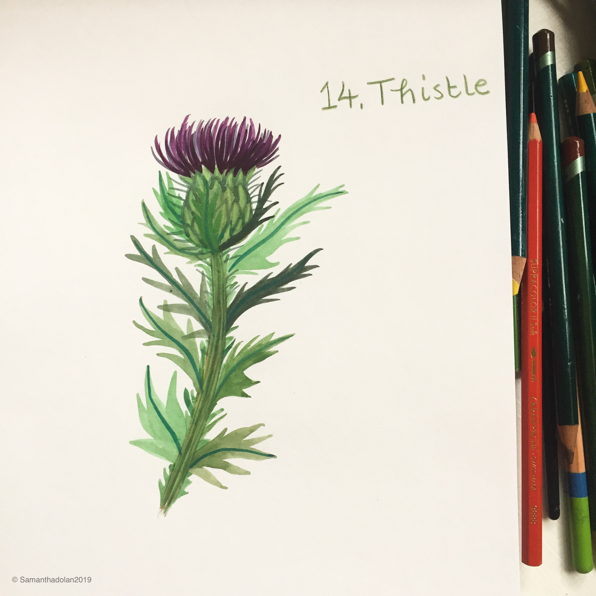 thistle by samantha dolan