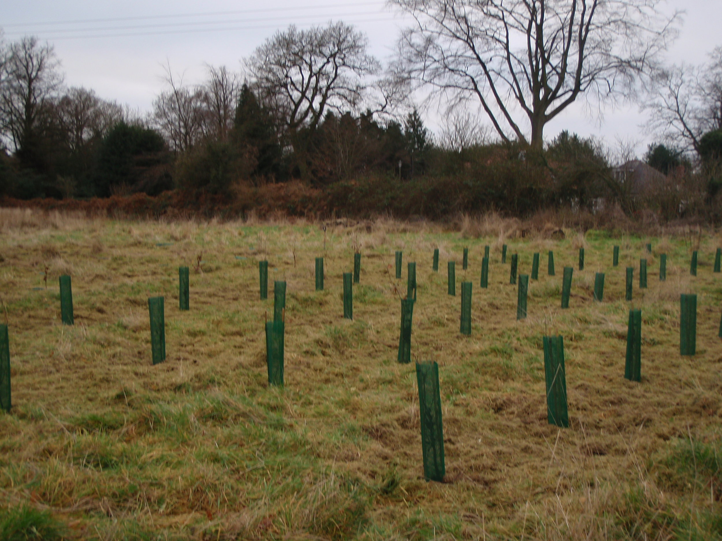 Tree planting - Clent, Worcestershire