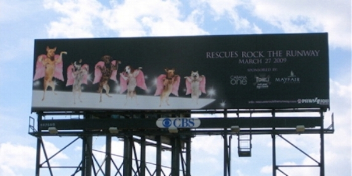 Billboard space donated by CBS gained prime exposure to our event.