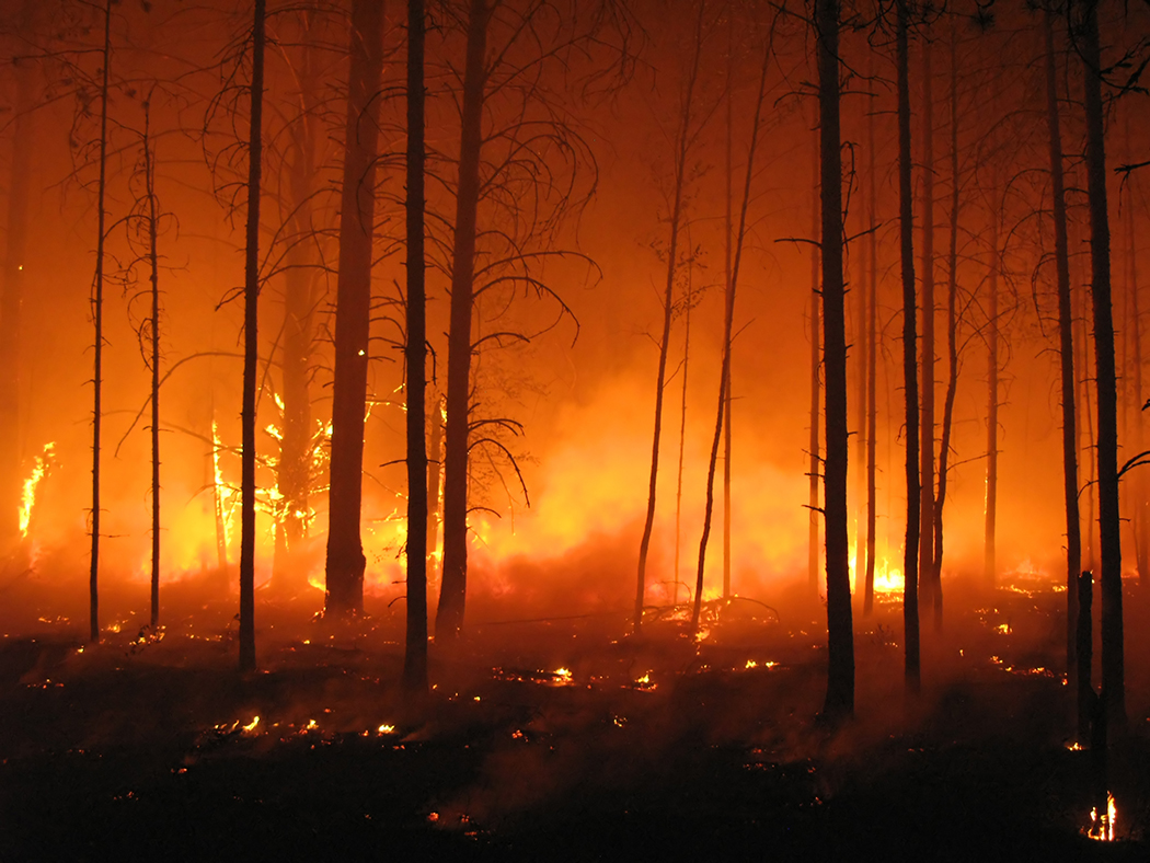 Putting out forest fires with sound -