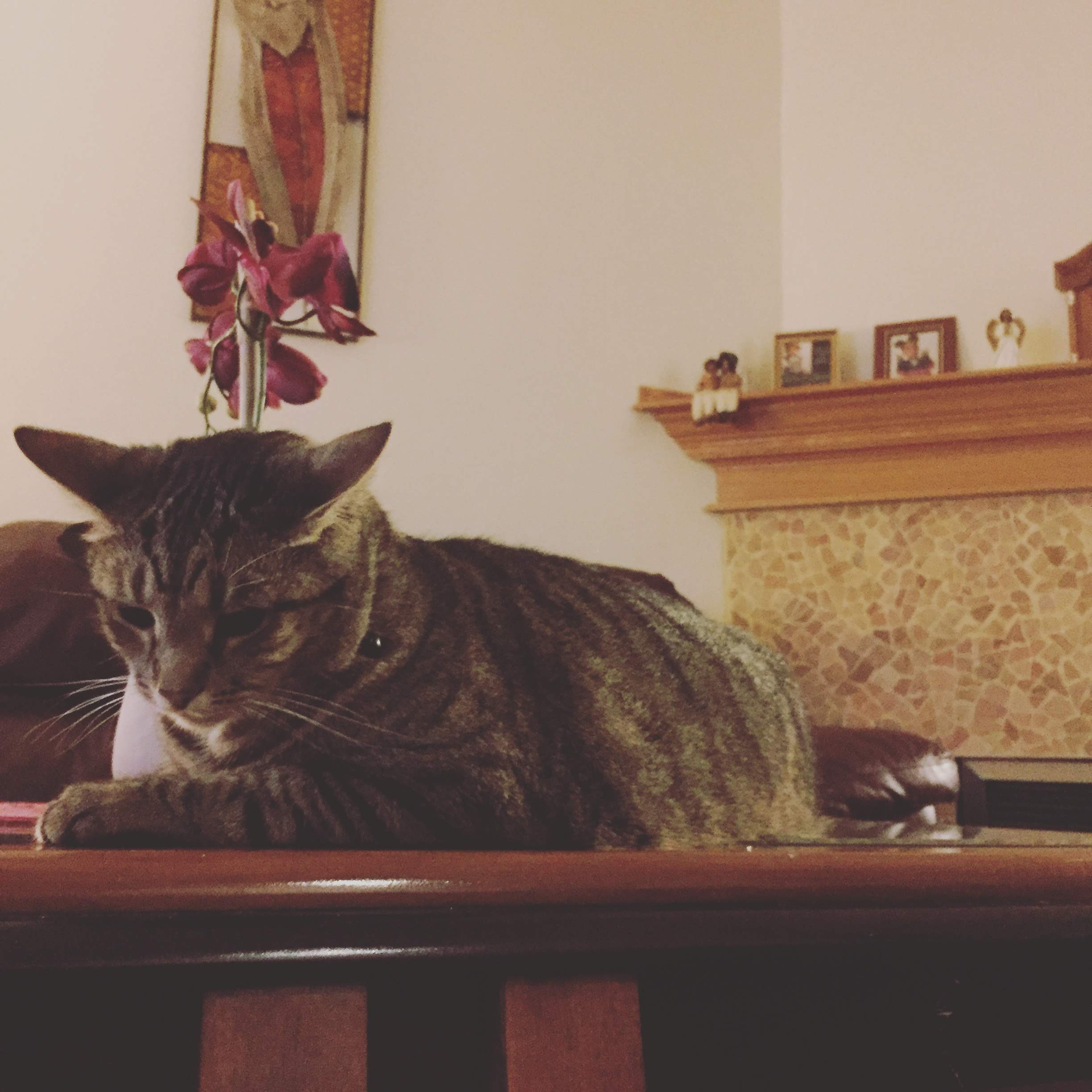 A picture of my grandma's cat the night of her passing. Grandma passed one year ago today. Rest well ancester and thanks for your guidance.