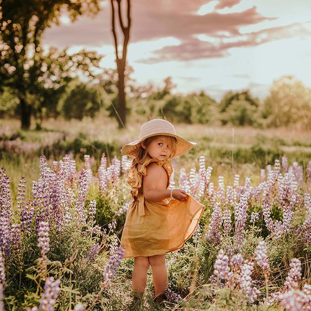 Lupines and a sweet little girl at sunset 🌞