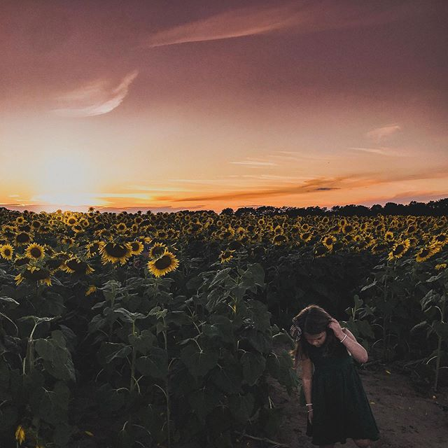 🌻An extra special family session tonight among the sunflowers