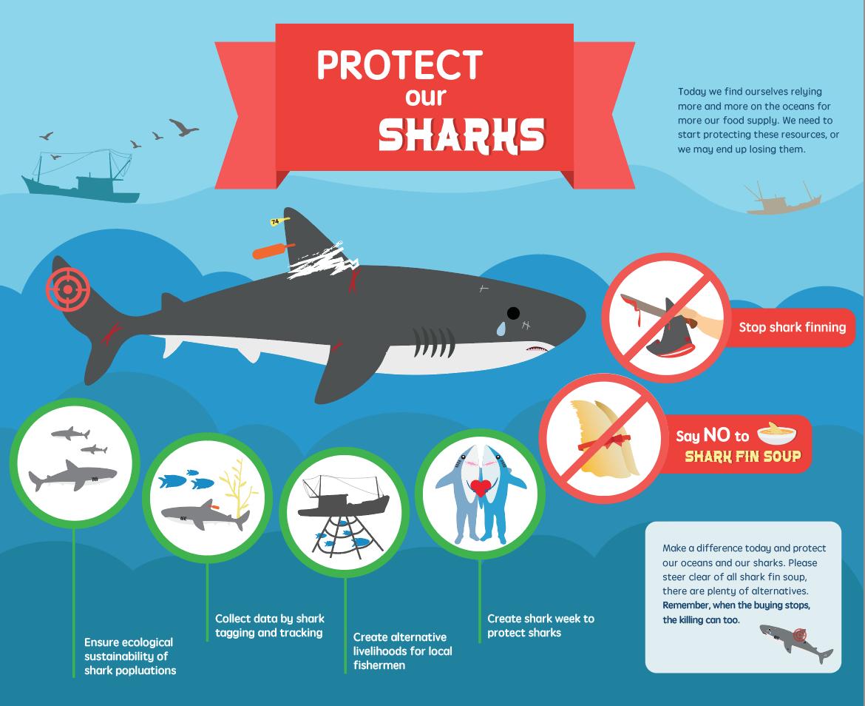 SharkFin01.png