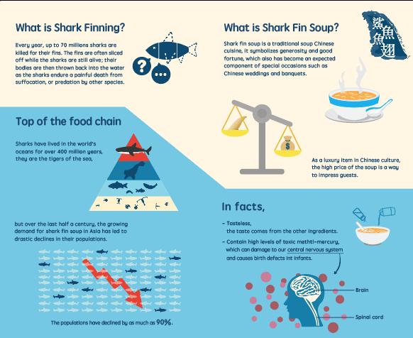 SharkFin03.png