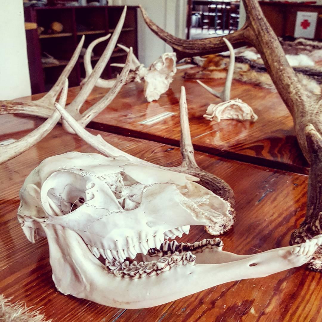 Mammals of Pine Mountain