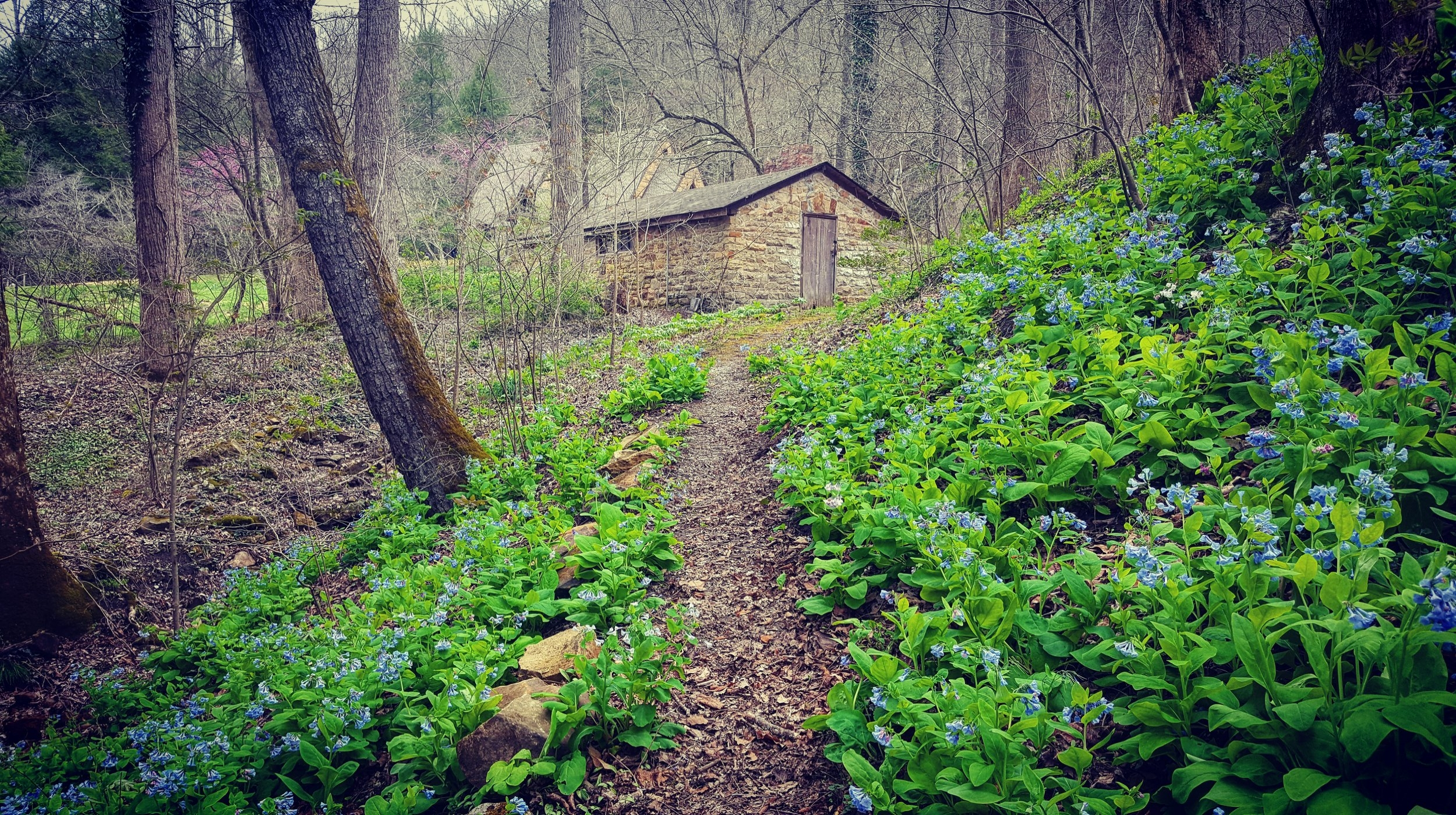 Find your path to Pine Mountain Settlement School