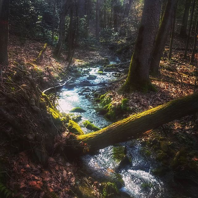 Is there anything more magical than morning light on a woodland creek? #springinthemountains