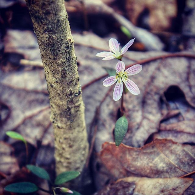 A season of tiny miracles begins. #springwildflowers