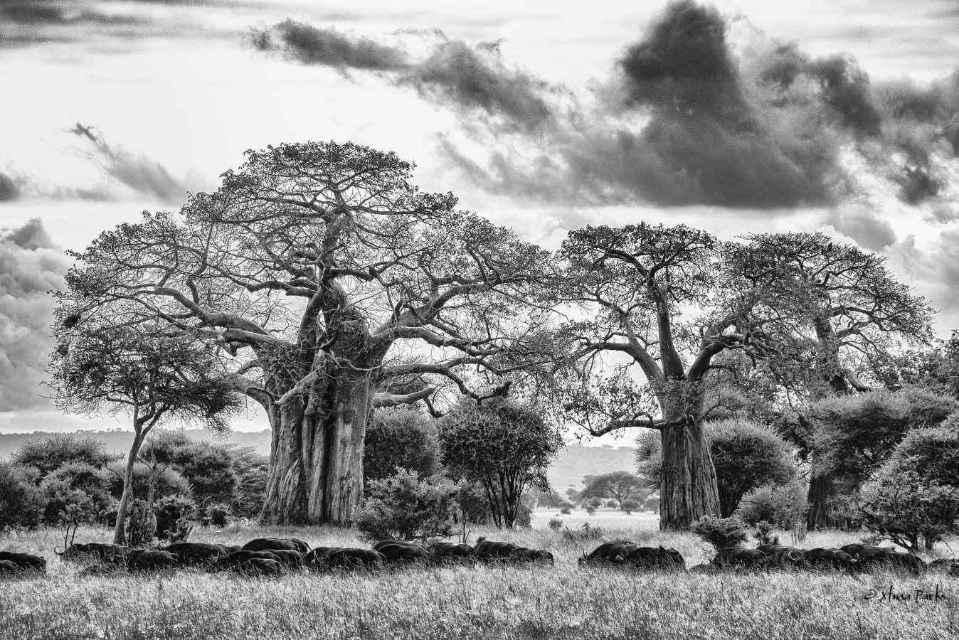 Baobab Crossing.jpg