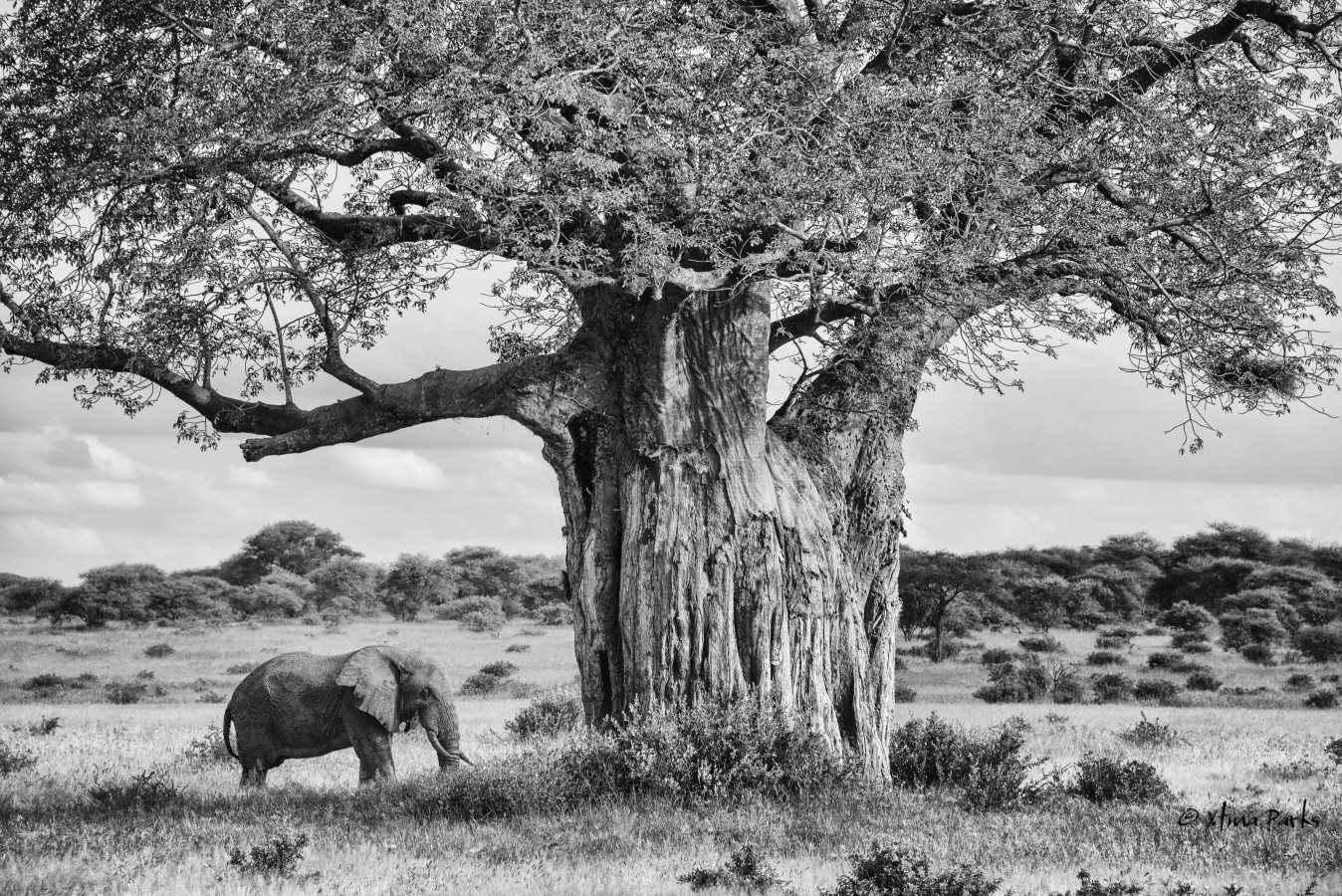 Dream of Africa.jpg