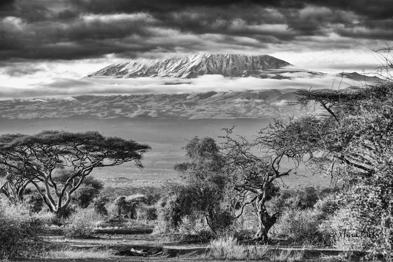 Dream of Kilimanjaro.jpg