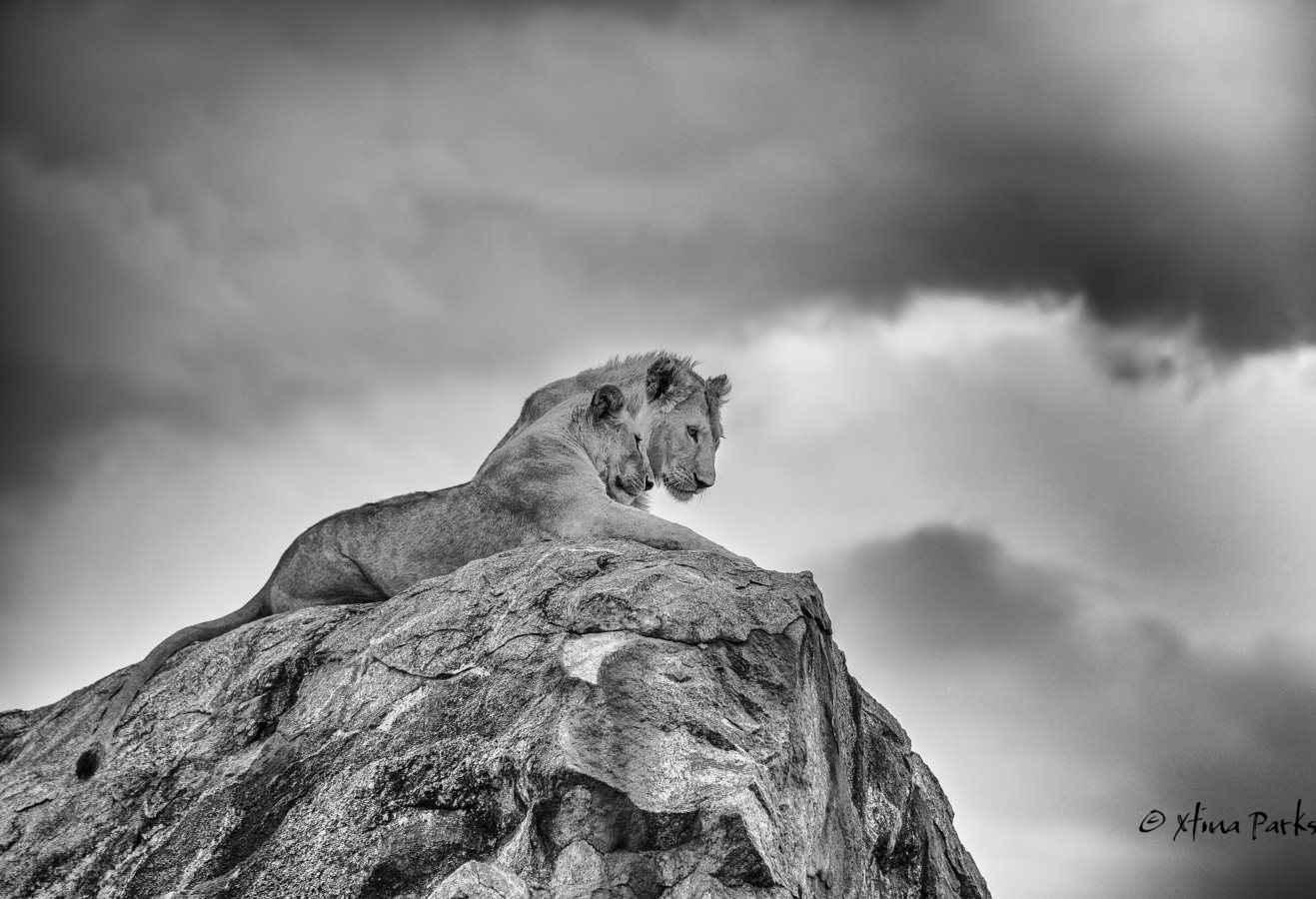 Little Pride Rock.jpg