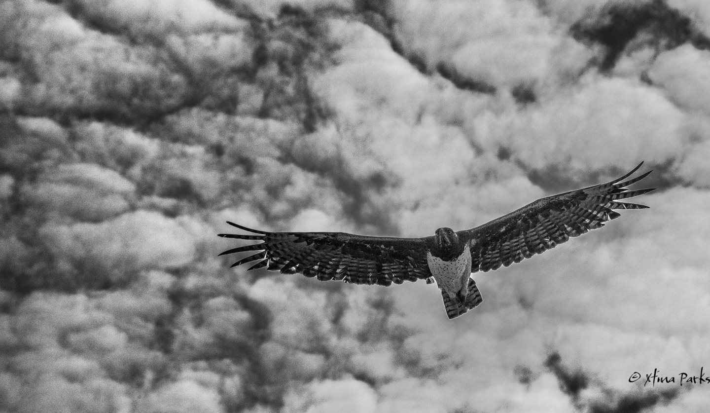 Martial Eagle Patrol.jpg