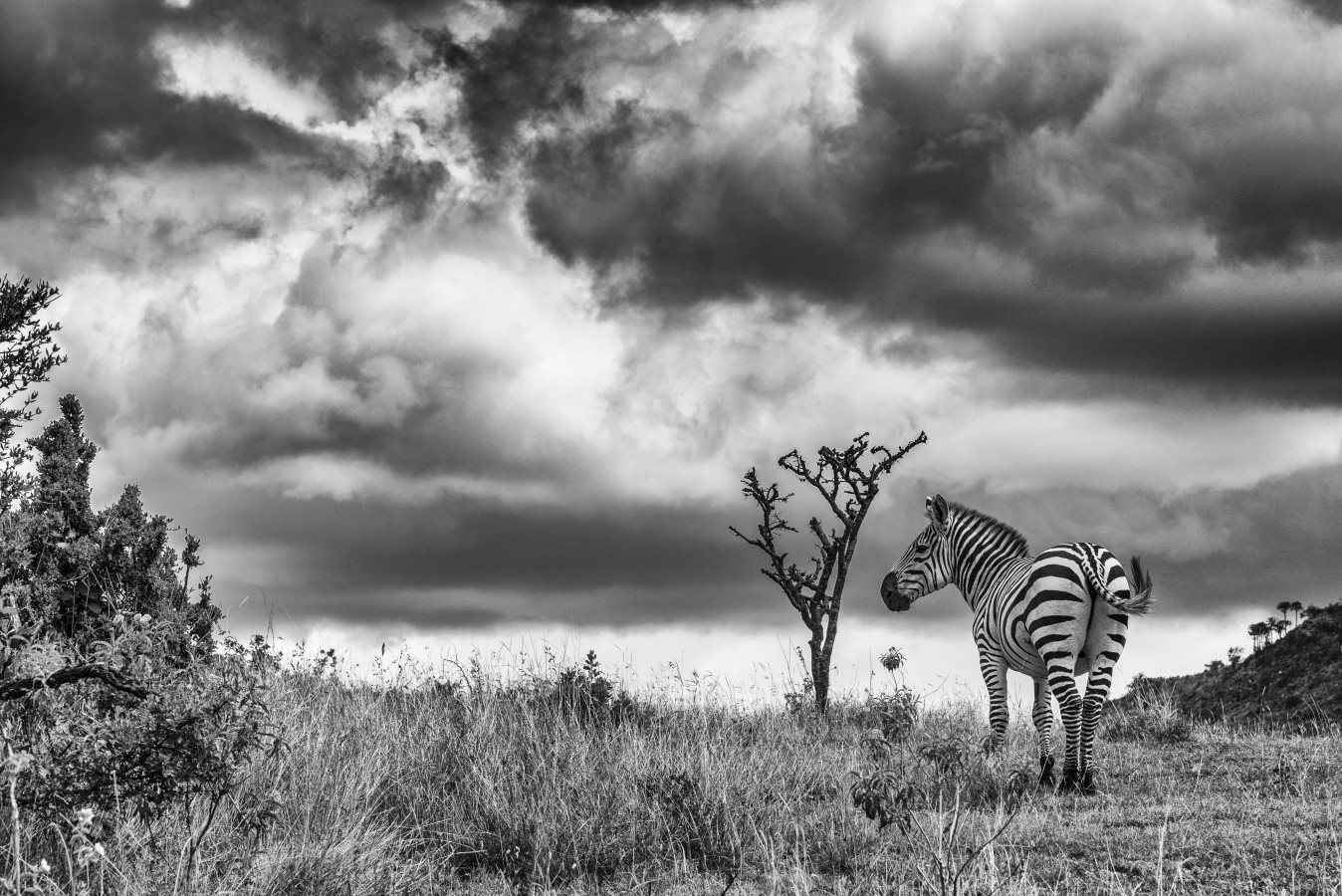 Zebra Clouds.jpg