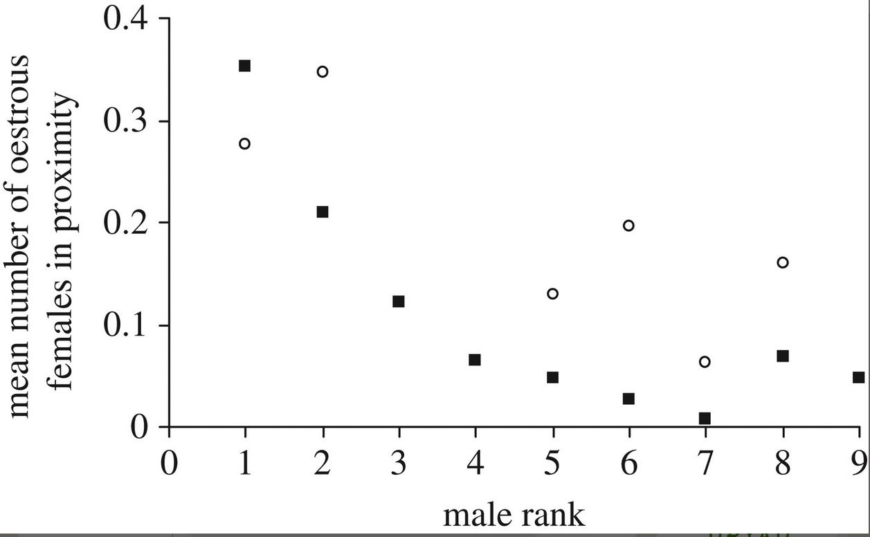 """Mean number of oestrous females in proximity of focal males in relation to absence (filled squares) or presence (open circles) of the male's mother. For all but the highest ranking male, the number of oestrous females in proximity was higher when the mother was also in proximity."" From ' Mothers matter! Maternal support, dominance status and mating success in male bonobos ( Pan paniscus ) '"