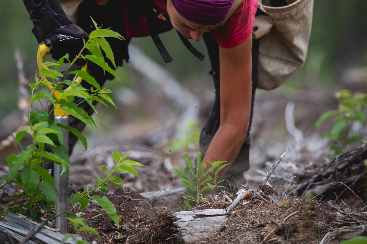 Optimized-One Tree Planted012.jpg