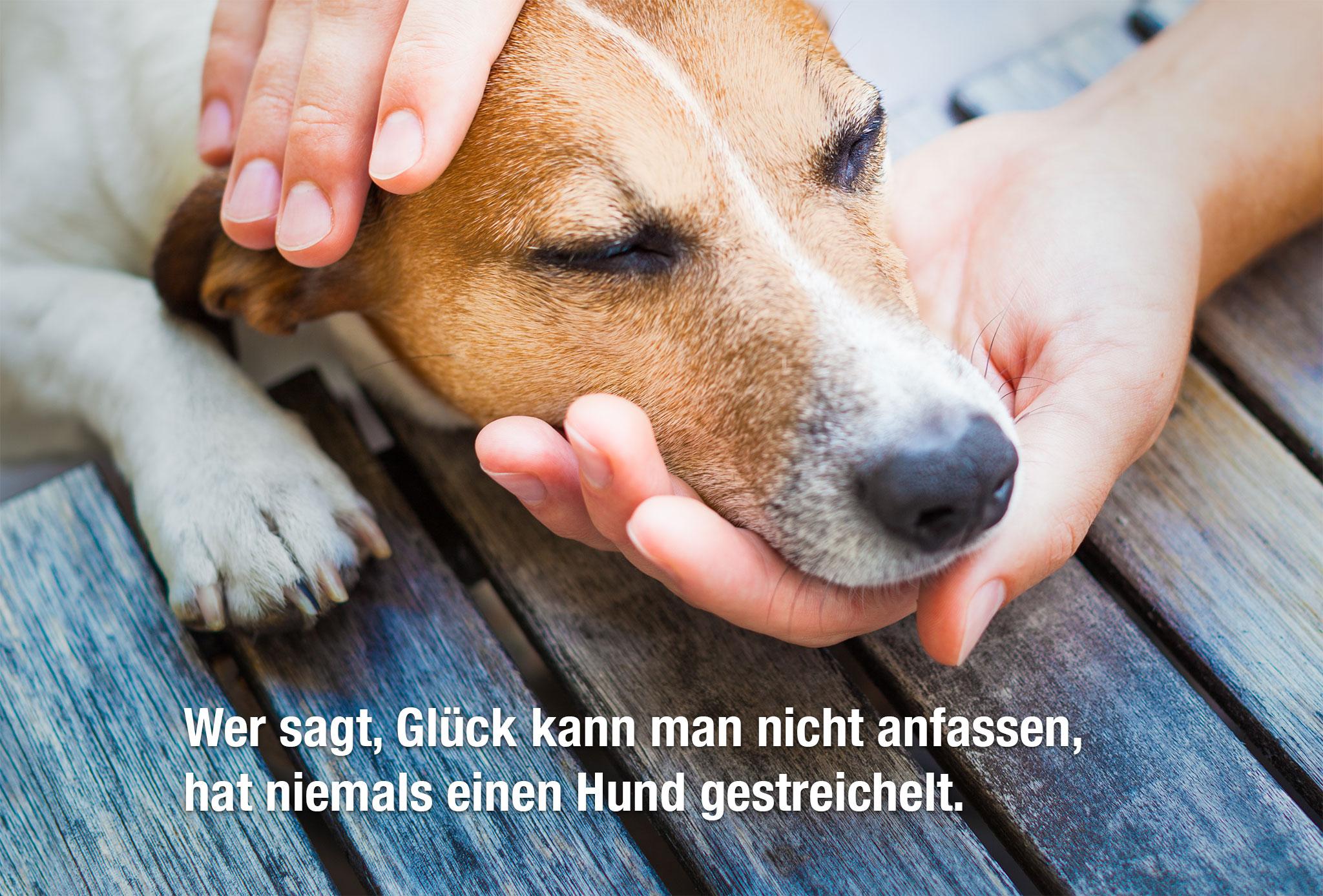 Buddyandbello.com Hundequote Glück