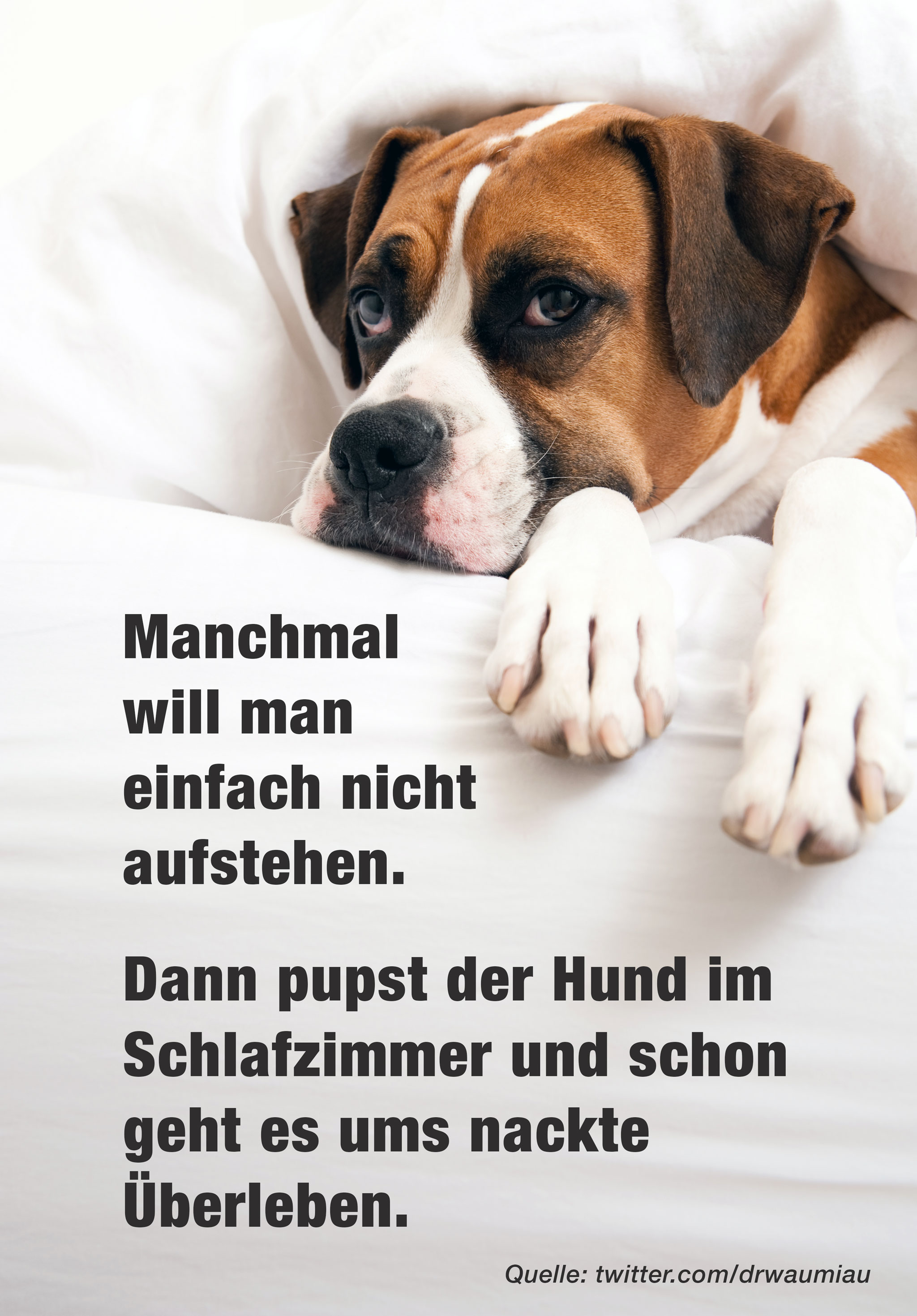Buddyandbello.com Hundequote Hundeliebe