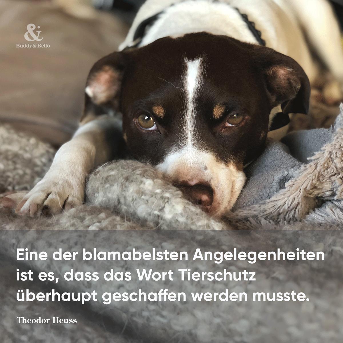 buddyandbello_tierschutz.png