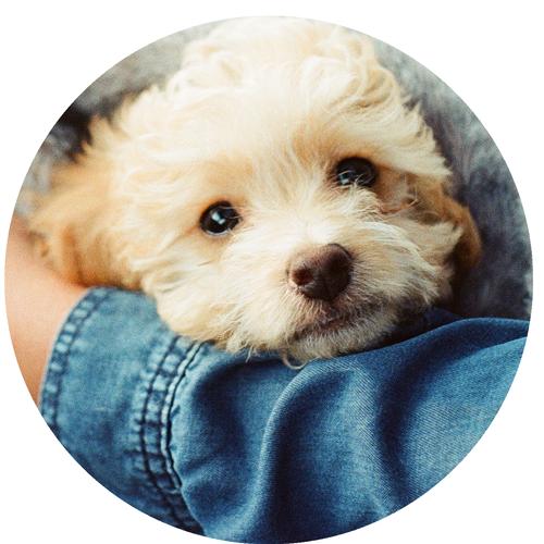 Kuscheln erlaubt - die körperliche Nähe gibt dem Hund Sicherheit und Geborgenheit - gerade in unsicheren Situationen