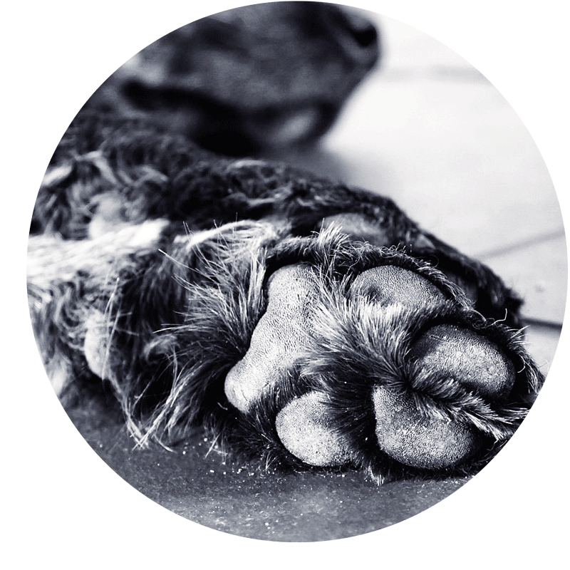 Pfötchenbalsam - für samtweiche und gesunde Hundepfoten