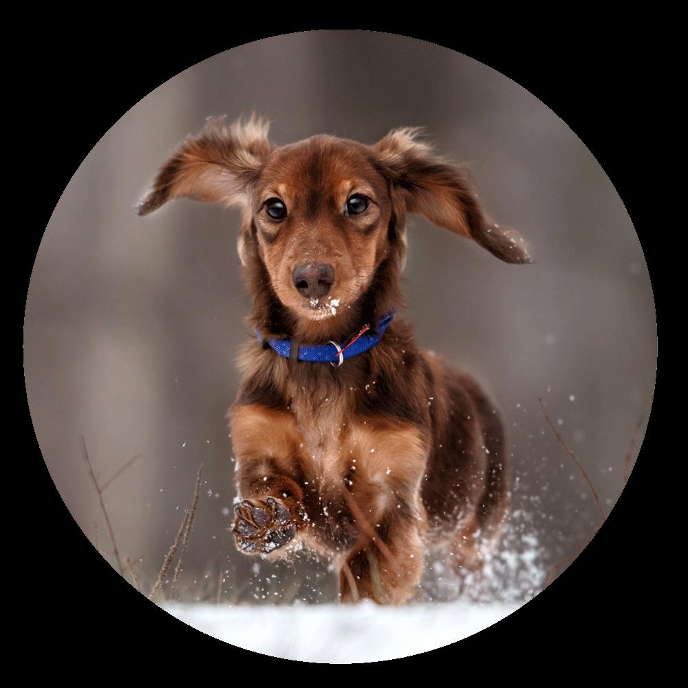 Bewegung an der frischen Luft - tut Mensch und Hund gleichermaßen gut