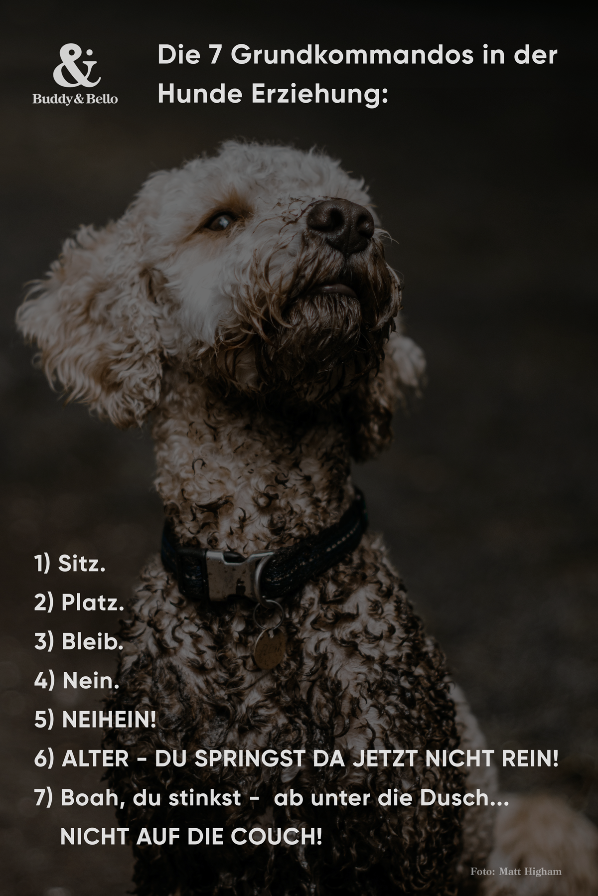 buddyandbello_sprüche_7regeln.png