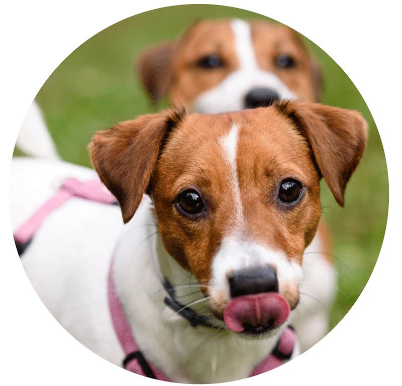 Von Leinenpflicht bis Mikrochip - als Hundehalter hat man einiges zu beachten