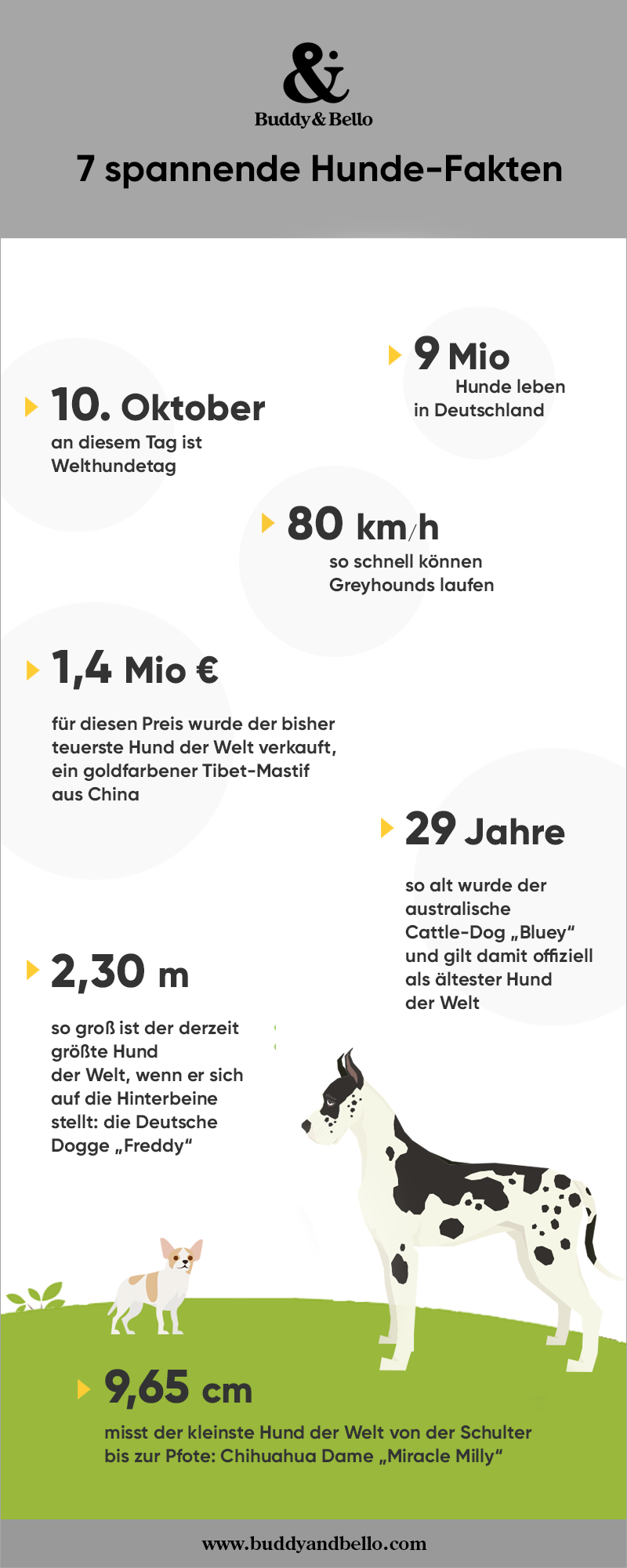 Buddy_and_Bello_Infografik_Hunde_in_Zahlen.png