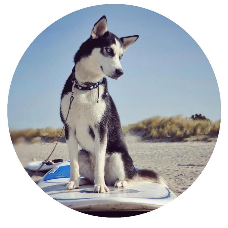 Gewöhnung ans Board - der Hund sollte zunächst an Land mit Paddel und Board vertraut gemacht werden